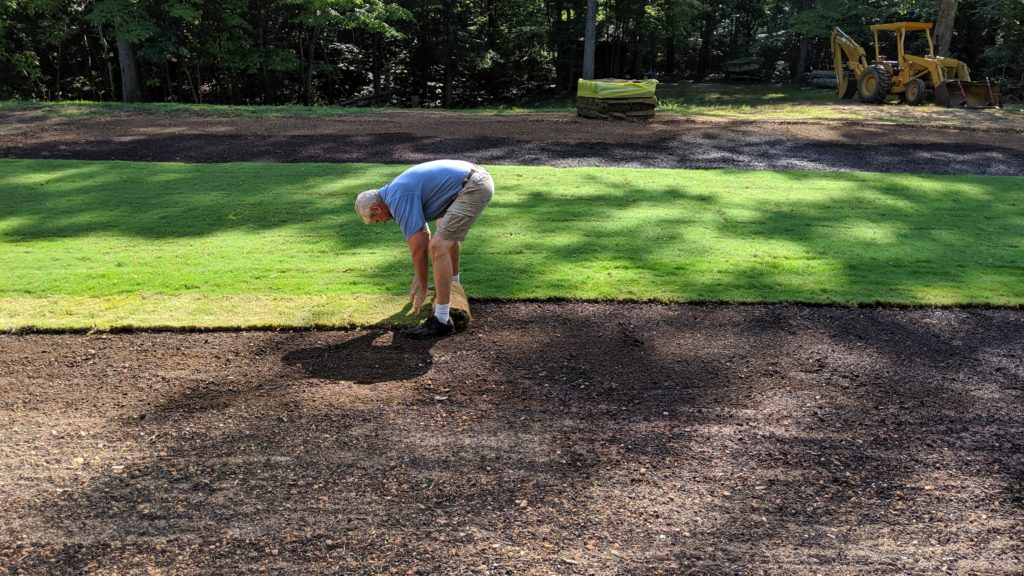 laying zoysia sod prior to plugging